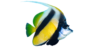 home_underwater_box1